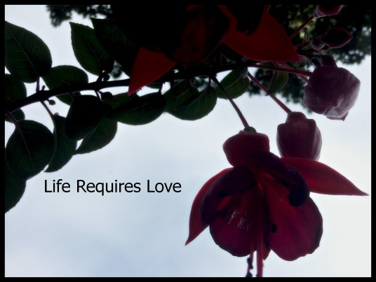 Life Requires Love